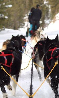 Dog Sledding in Montana and Yellowstone National Park