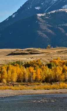 Explore the colors of fall in Yellowstone National Park  in Montana and Yellowstone National Park