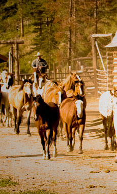 Horseback Riding in Montana and Yellowstone National Park