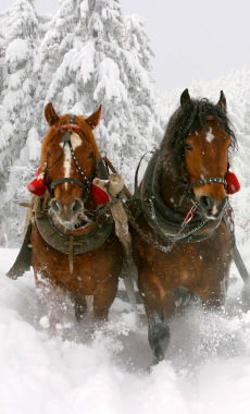 Sleigh Rides in Montana and Yellowstone National Park